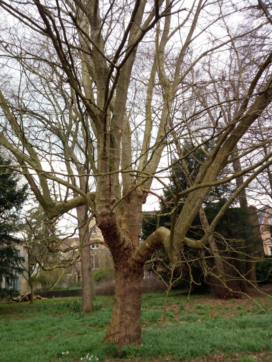 University Parks - Oxford